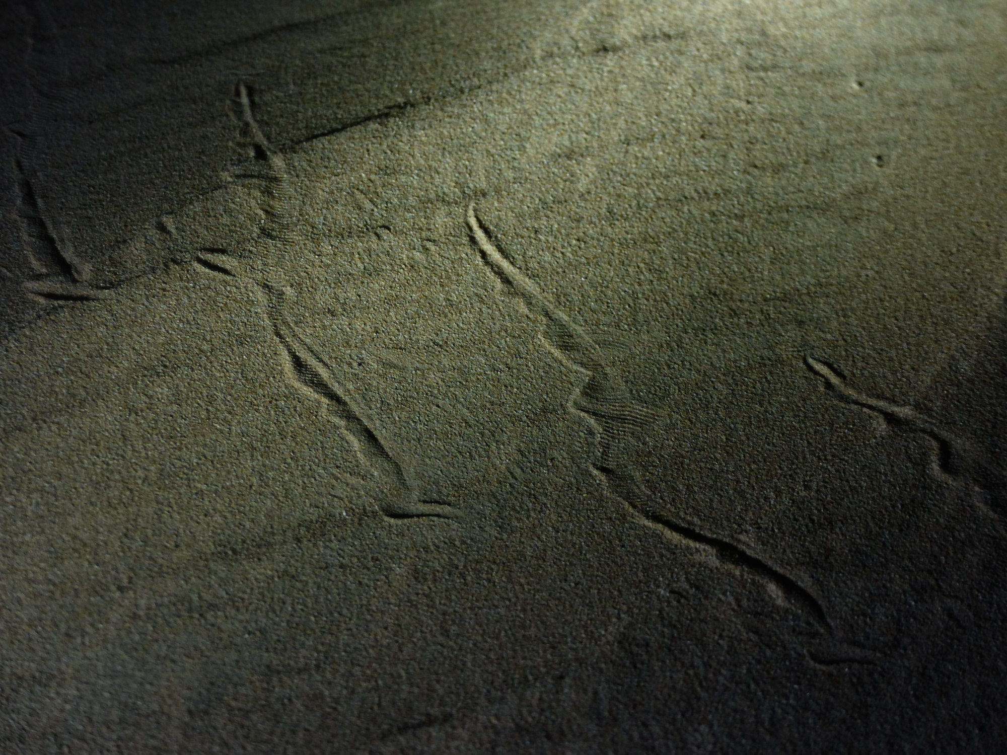 snake tracks in UAE