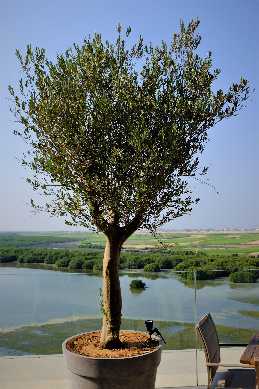 Weekenduae Thanani Al Zhora Golf Club